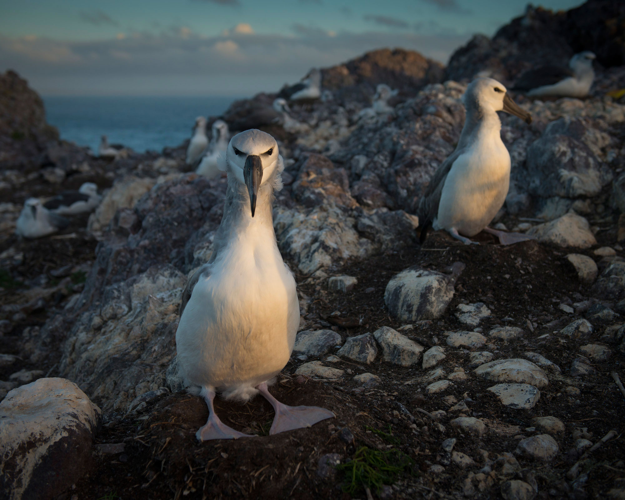 On_Albatross_Island_013