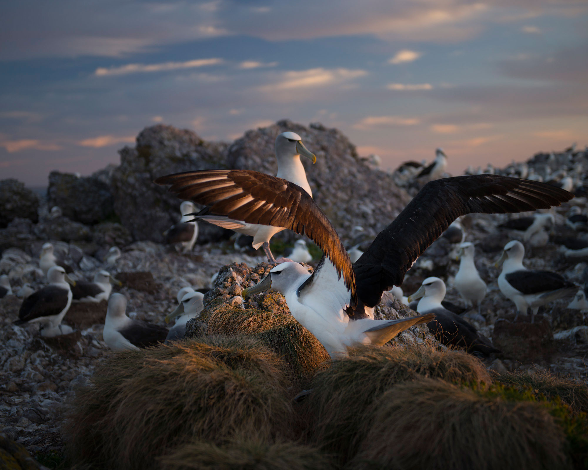 On_Albatross_Island_016