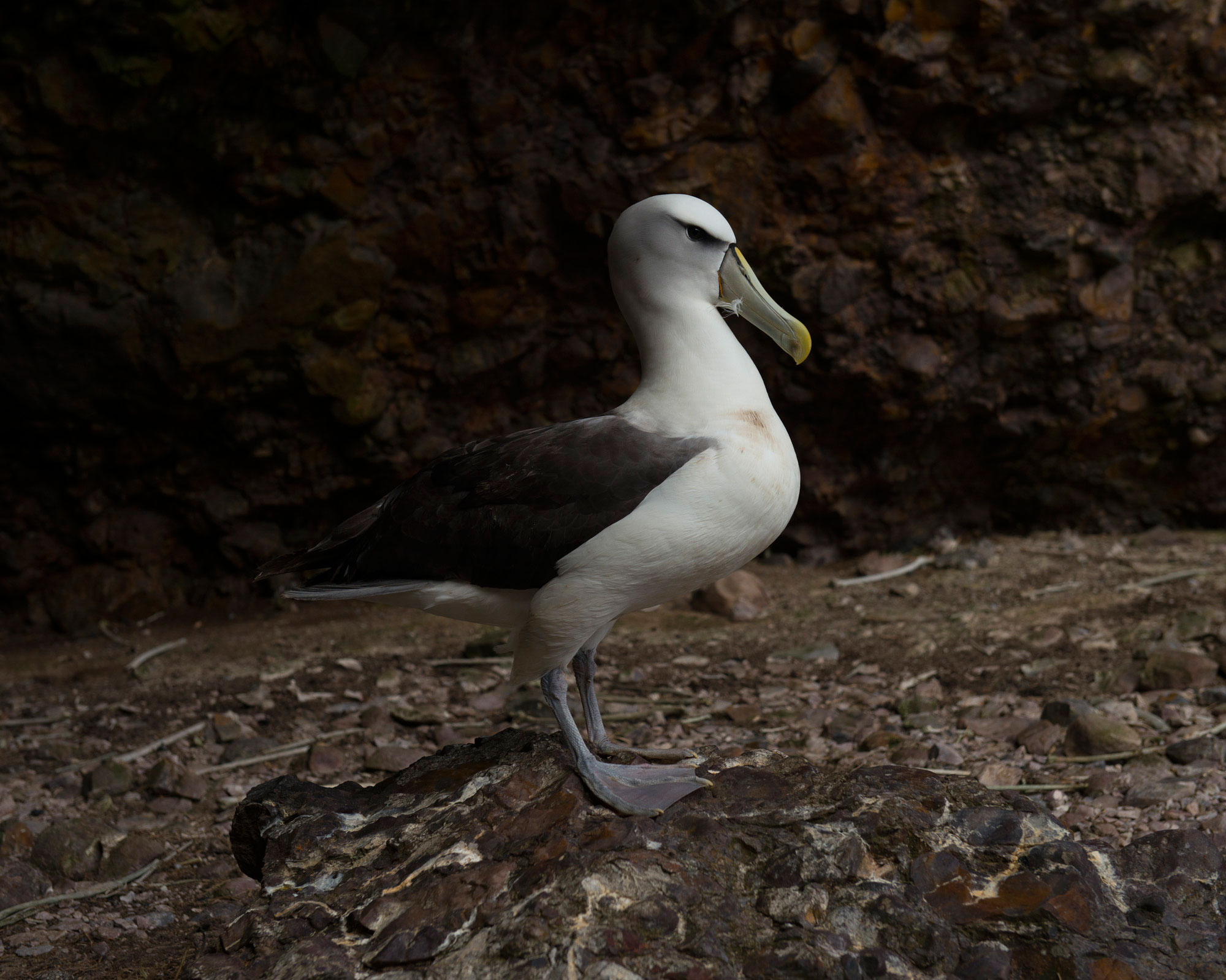 On_Albatross_Island_017