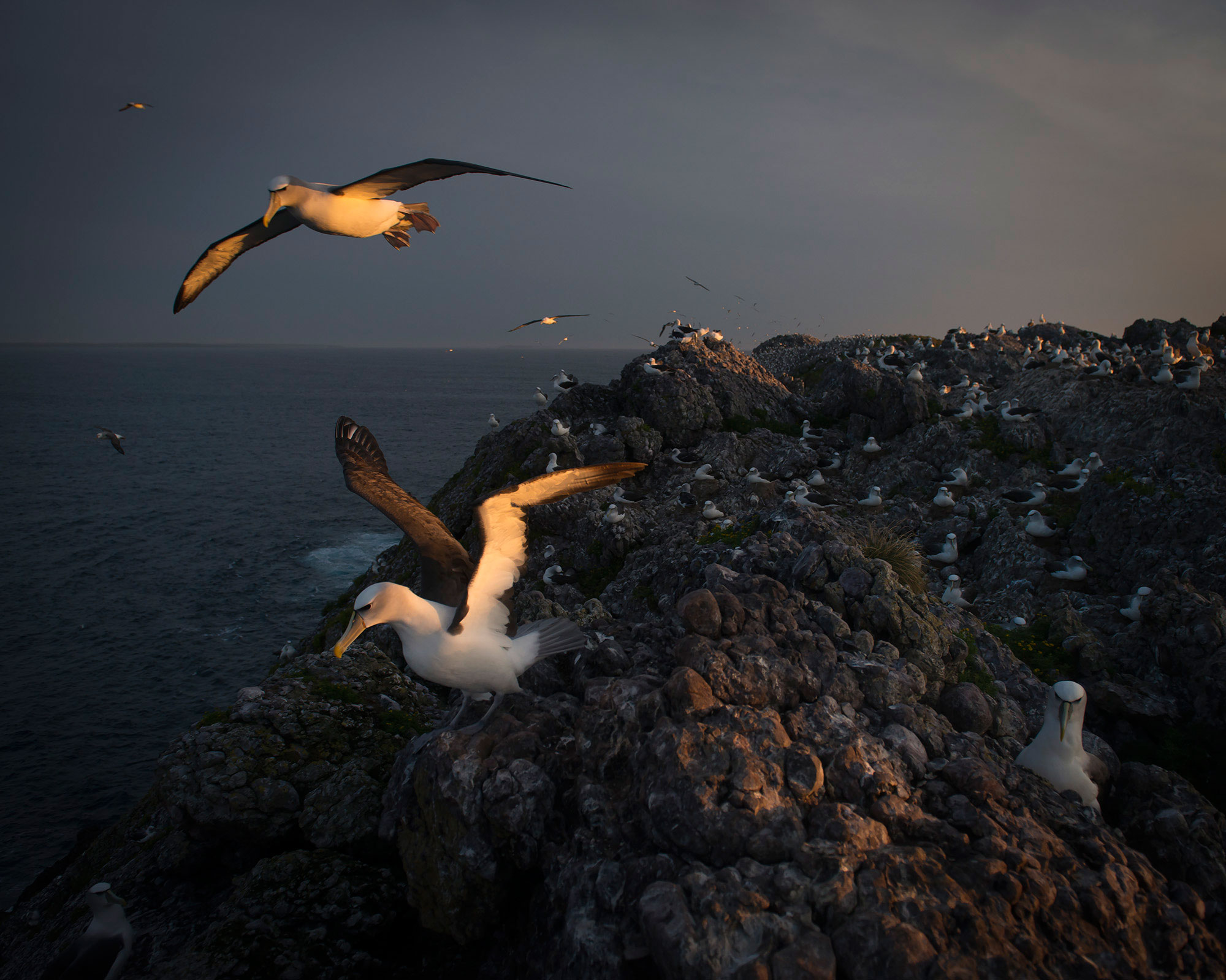 On_Albatross_Island_018